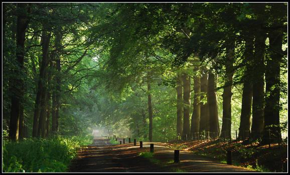 On a June morning lane