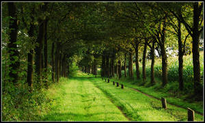 Going on a green lane