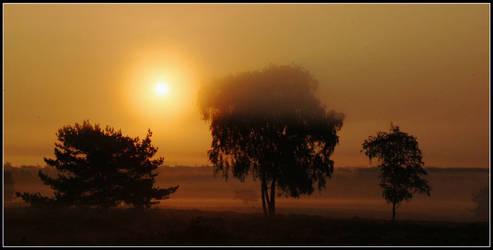 Morning magic on the heath
