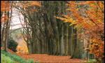 A November beech-tree line