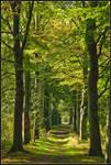 Early autumn beech-trees