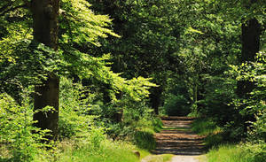Walking in the summer forest by jchanders