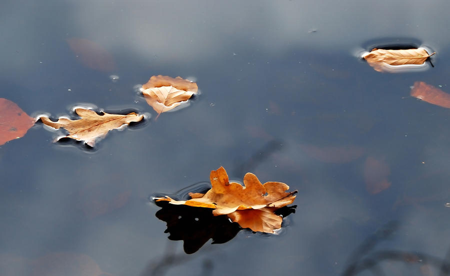 Leaves floating along by jchanders