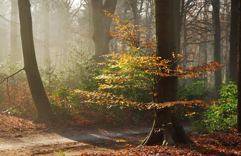 In the lightful forest by jchanders