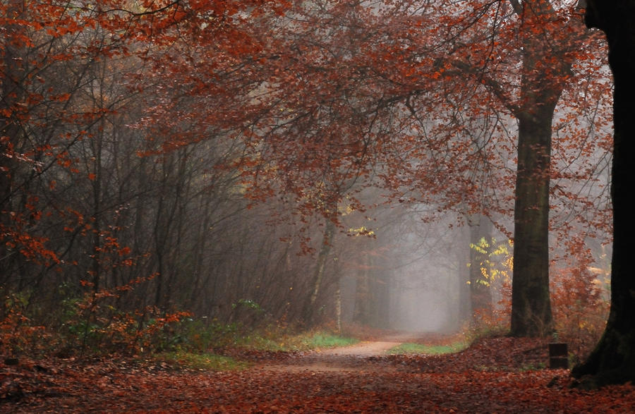 Walking in the autumnal forest again by jchanders