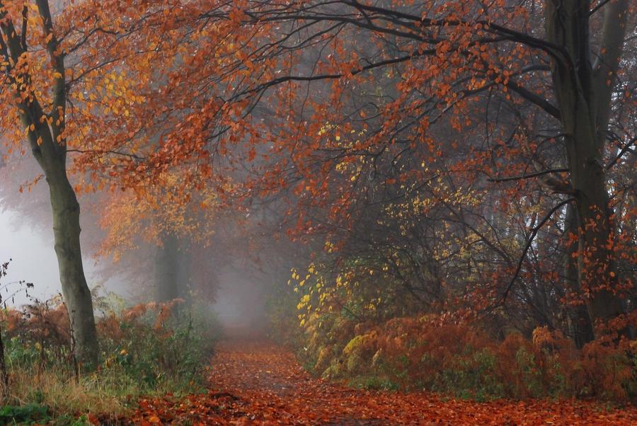 Autumn's colour palette at its best by jchanders