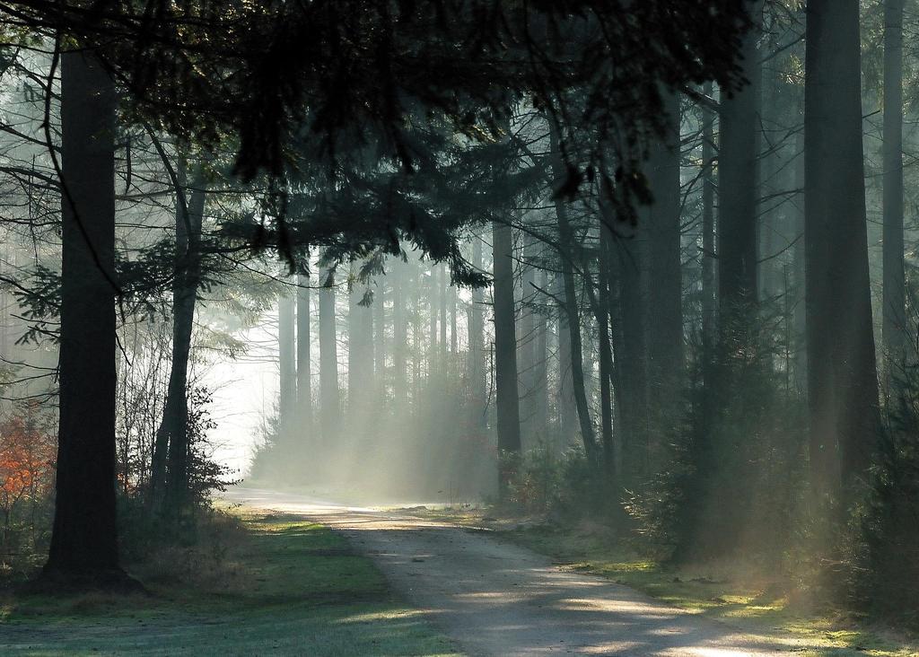 Going on a lightful morning stroll by jchanders