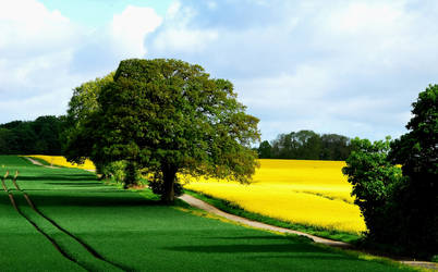 Walking through dream fields