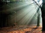 Let us find the light