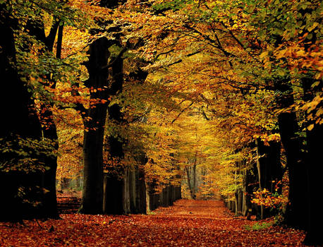 Autumnal splendour