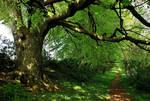 Walking under old trees