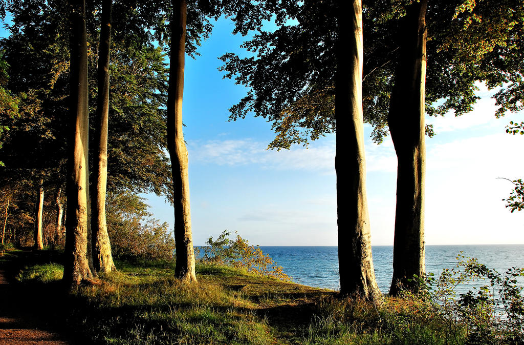 Beech-trees on Baltic Sea cliff by jchanders