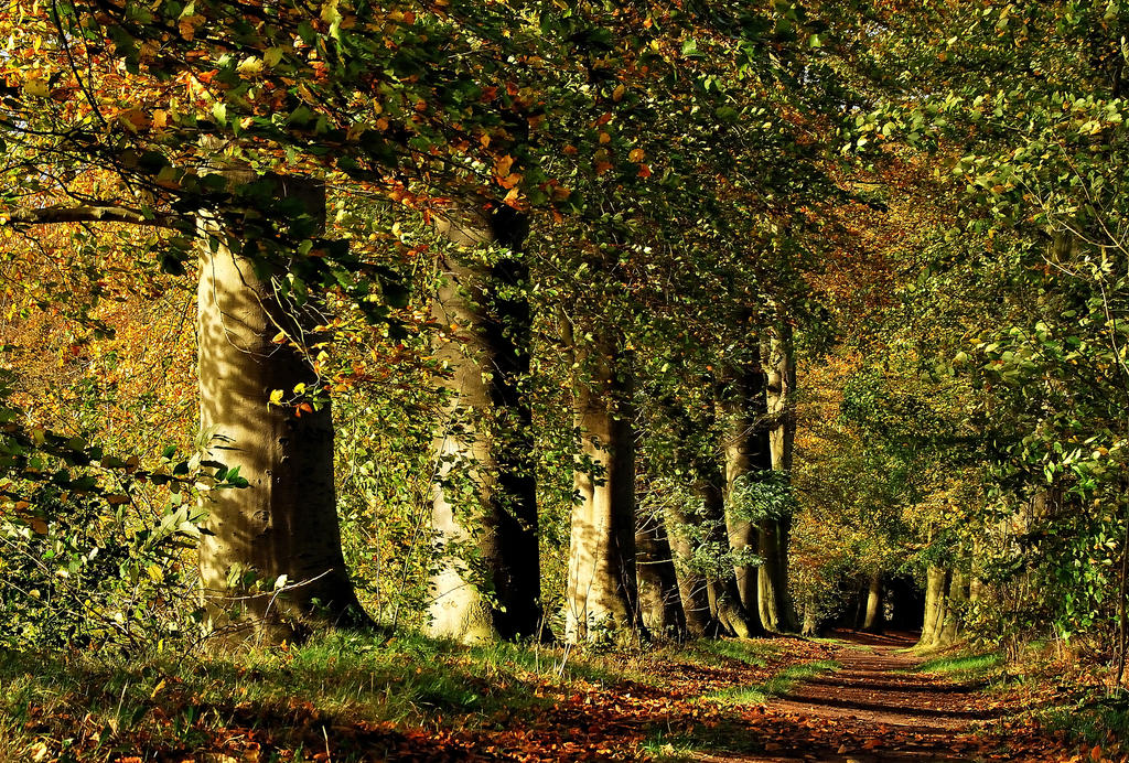 Continuing our autumnal walk by jchanders