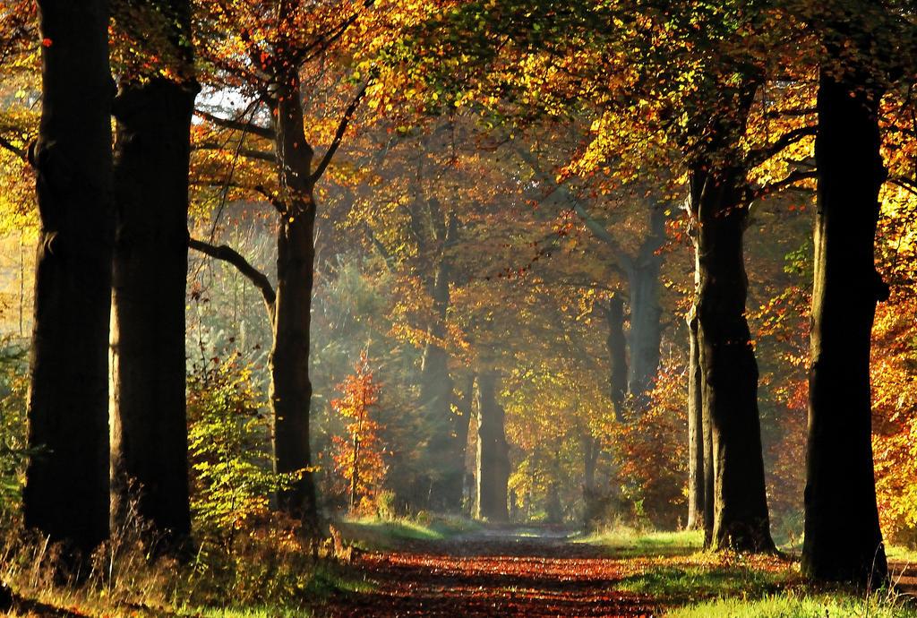 More autumnal colour pleasure by jchanders