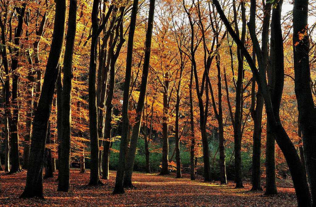 Enjoying more November sunshine by jchanders
