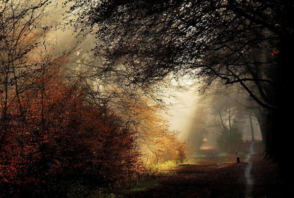 Walking on a December path by jchanders
