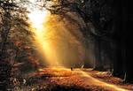 Cycling towards the morning light