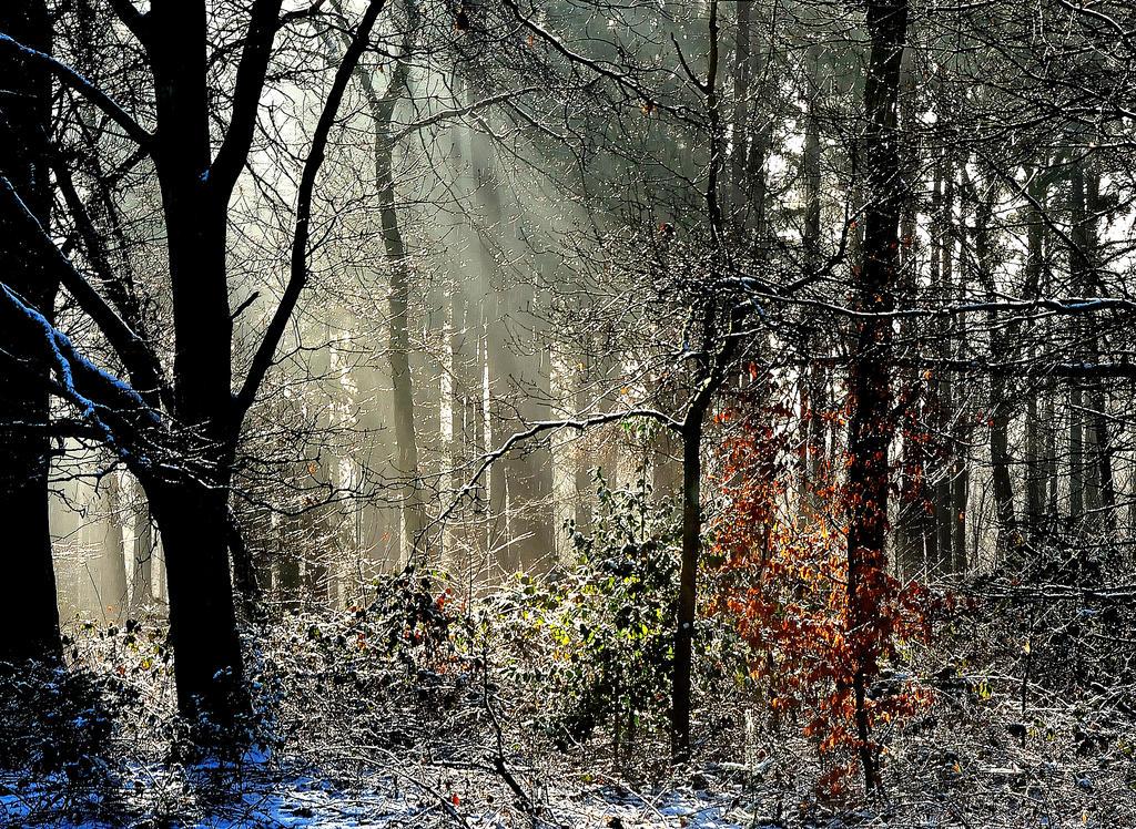 Last colours in winter wonderland by jchanders