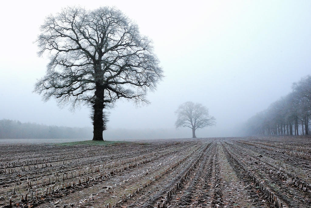 Old trees in the winter field by jchanders