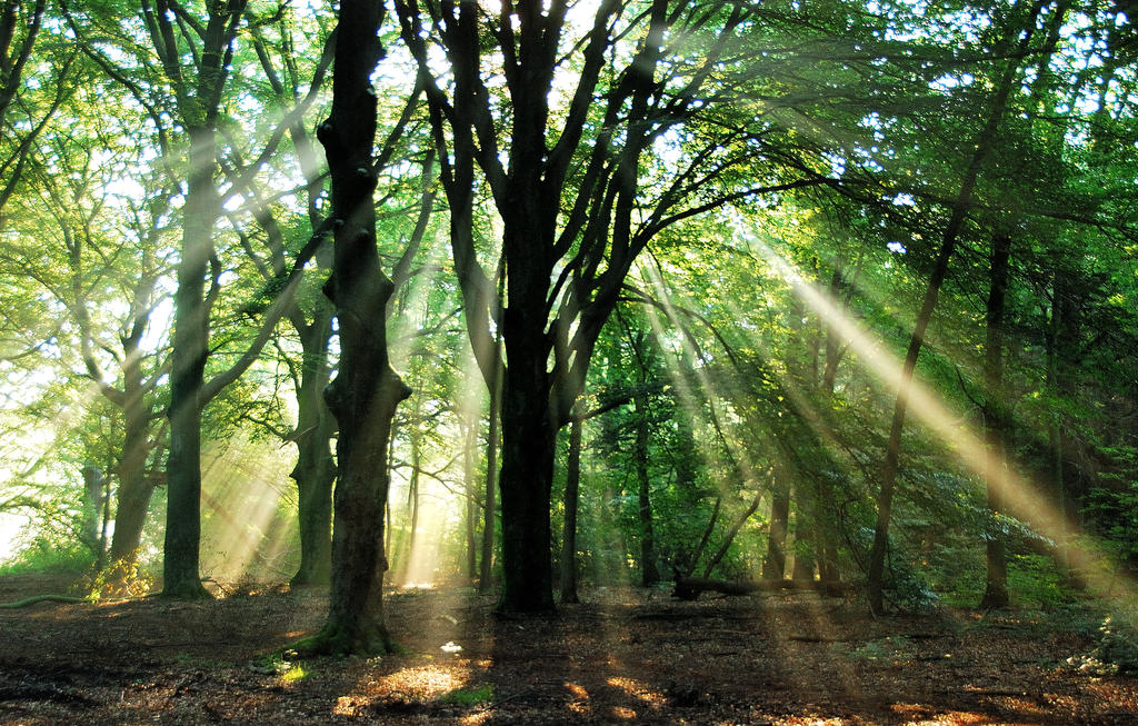 Morning forest light play by jchanders