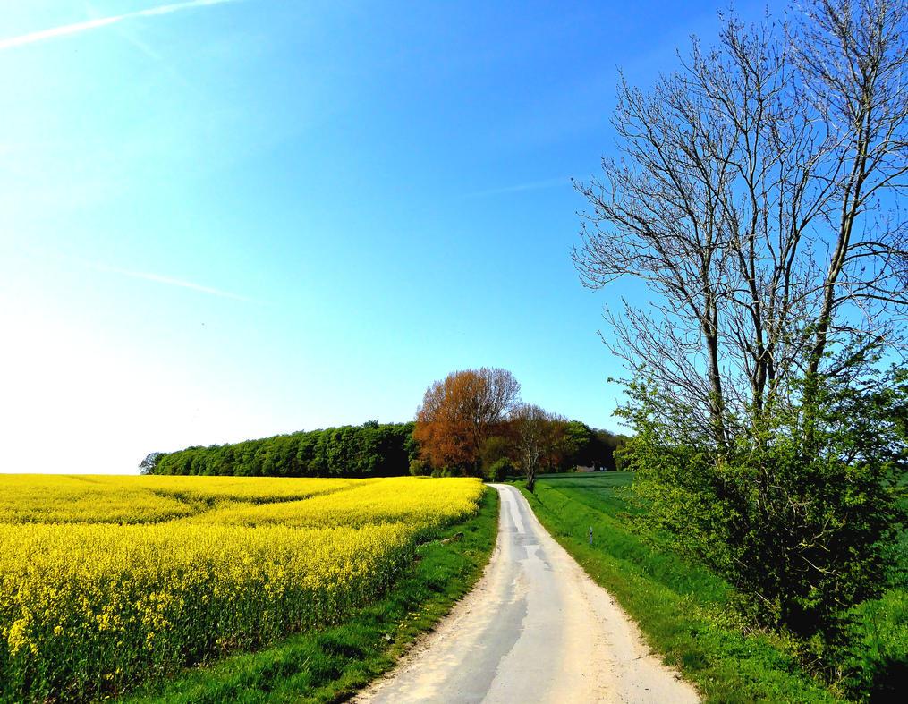 Remembering a lovely spring walk by jchanders