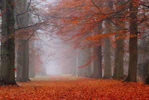Autumn mist lane by jchanders