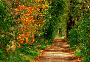 In search of autumnal colours by jchanders