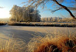 Remembering a white winter morning