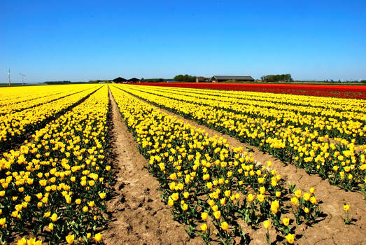Dutch flower power 2020