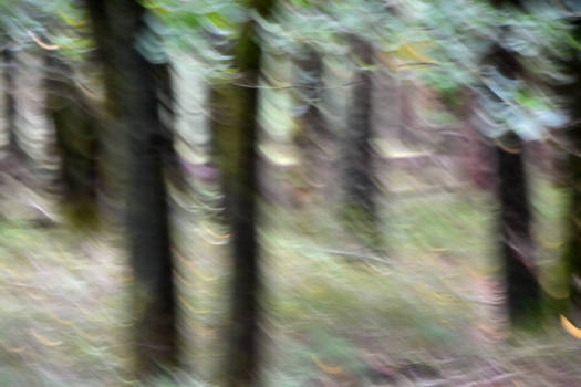 Are there ghosts in this forest