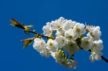 Spring, wonderful spring