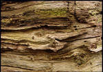 Late tree-trunk structures