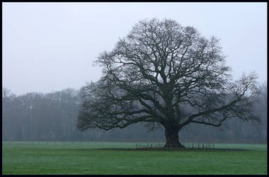 Another majestic oak-tree by jchanders