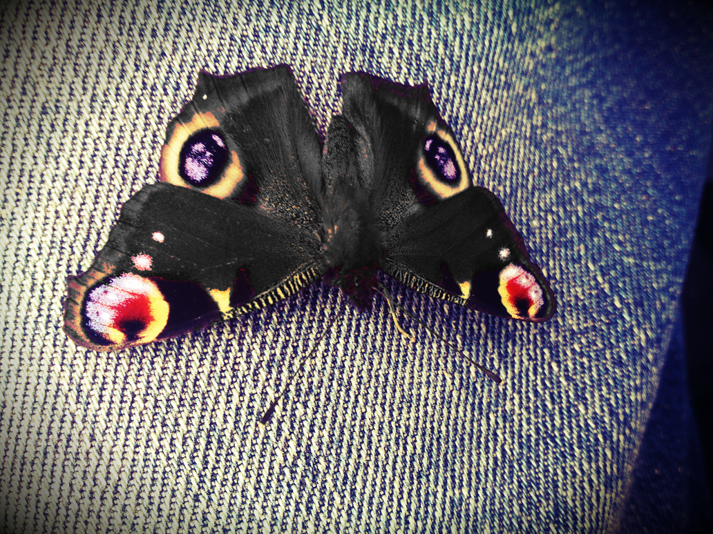 The Black Butterfly by Marchwiu