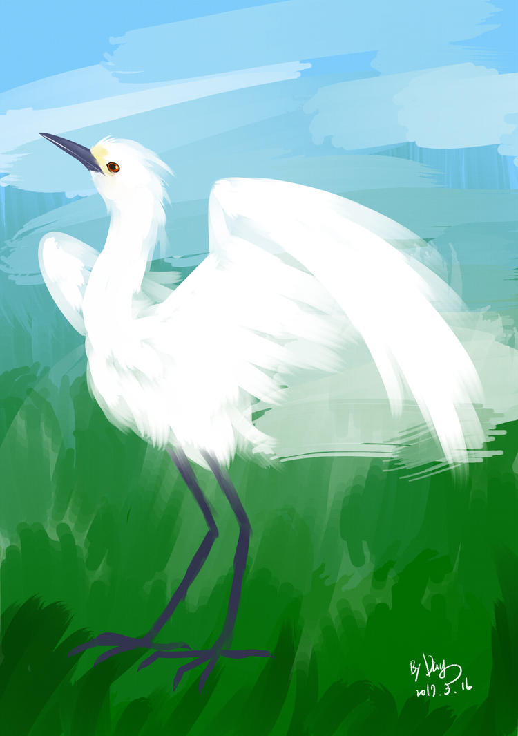 egret by amberday