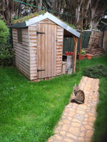 Green roof shed update 2018 Autumn by Bubblypies
