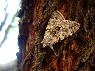 Moth by thetrepidation