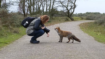New Fox ID by AngelaLouwe