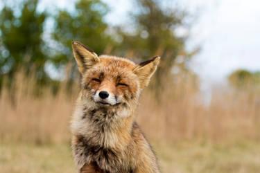 Happy Fox by AngelaLouwe