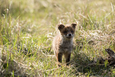 Baby fox by AngelaLouwe