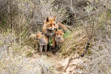 Fox Family by AngelaLouwe