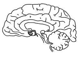 Transparent Base of Human Brain, black and white