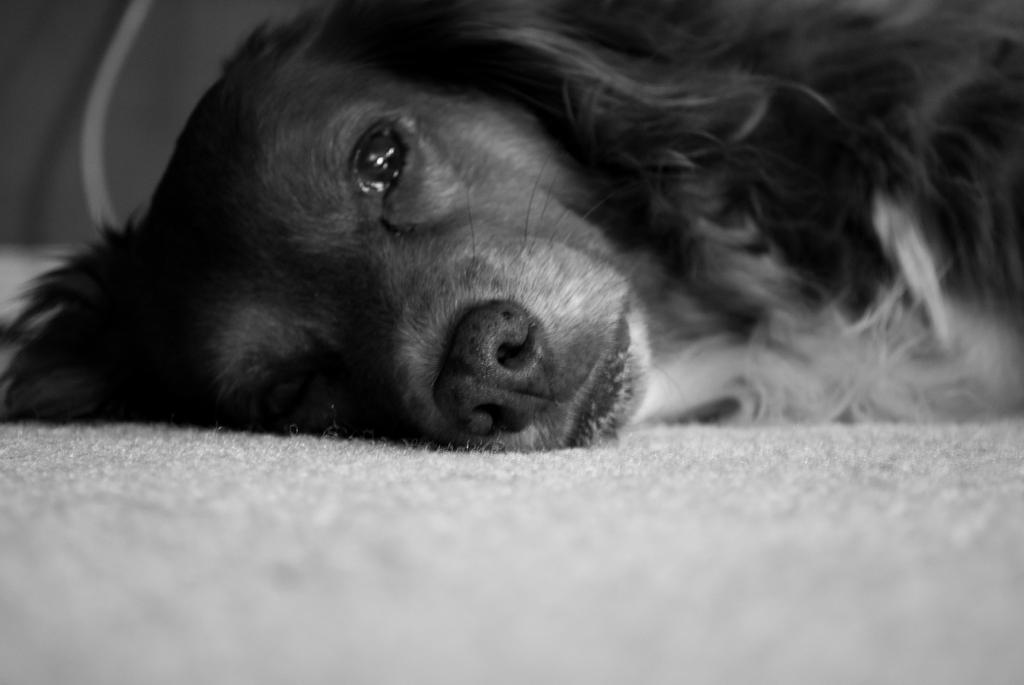 Tired Eyes by Gymdawg