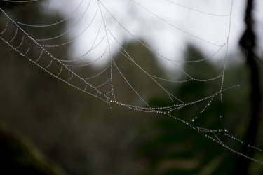 The Spider's Jewels