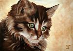 Little Cat V