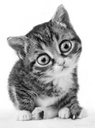 Little cat by StephanieVALENTIN