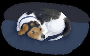 sleepy pupper