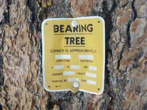Bearing Tree?