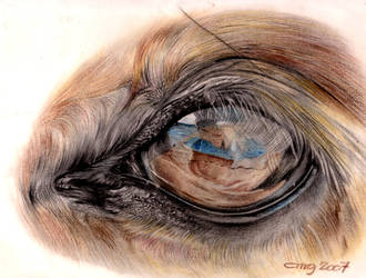 EYE _ OF _ HORSE _large by cmg2901