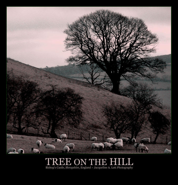 Tree on the Hill by Isquiesque